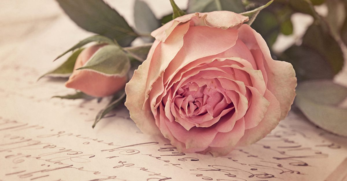 Roses_Pink_color_440793