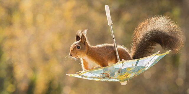 nature-animal-photography-backyard-squirrels-geert-weggen-thumb640