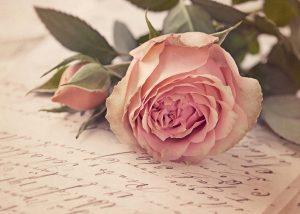 5 rose