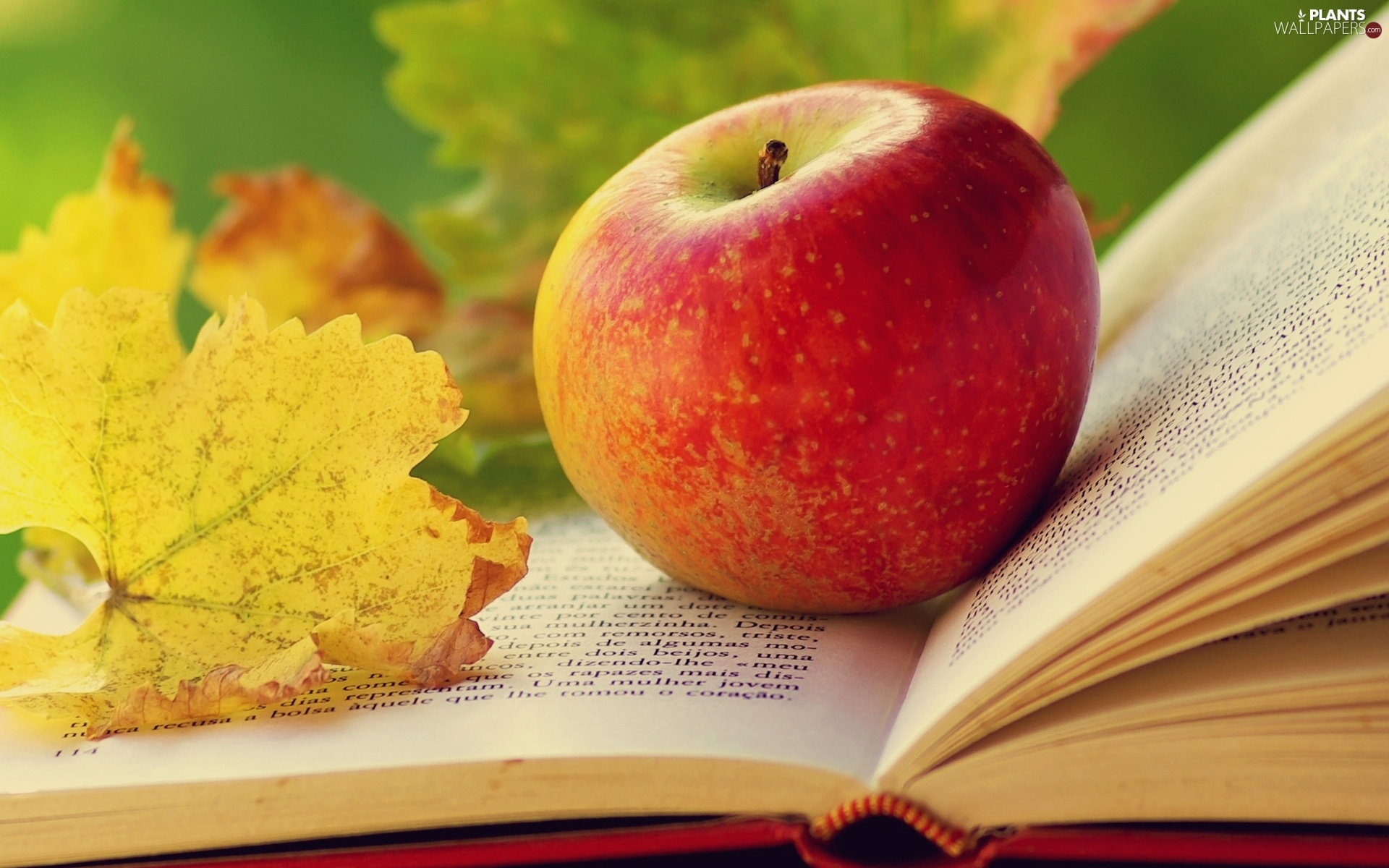 leaf-apple-autumn-book