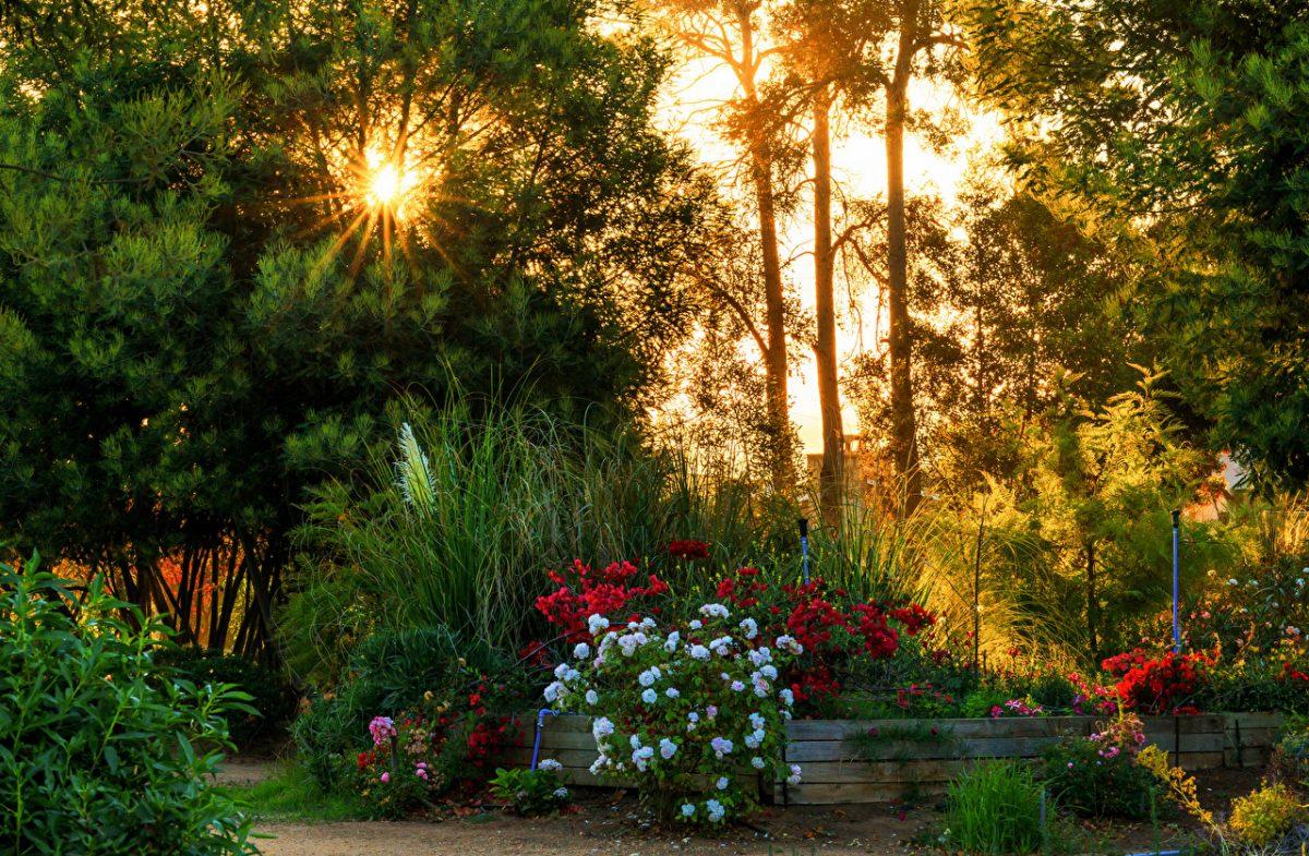Chile_Gardens_Algarrobo