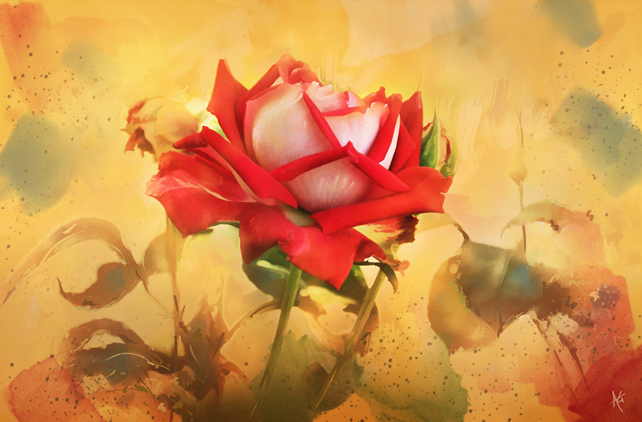 Roses_Painting_Art_Pictorial_art_533118_1280x842