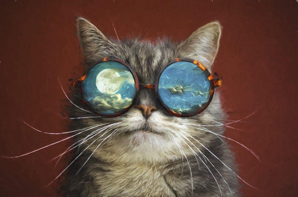 ОЧ продължение котка