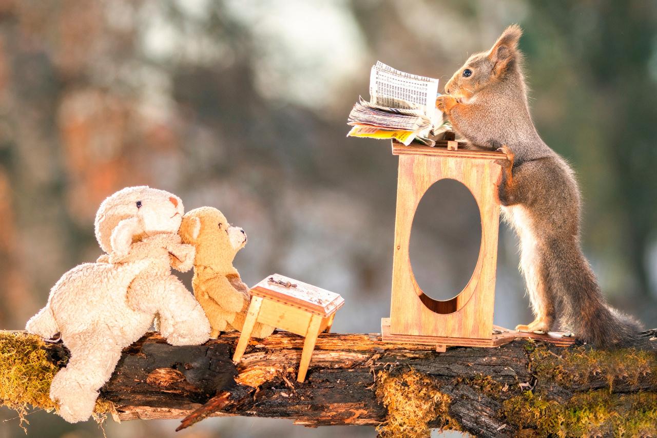 Squirrels_Teddy_bear_505709
