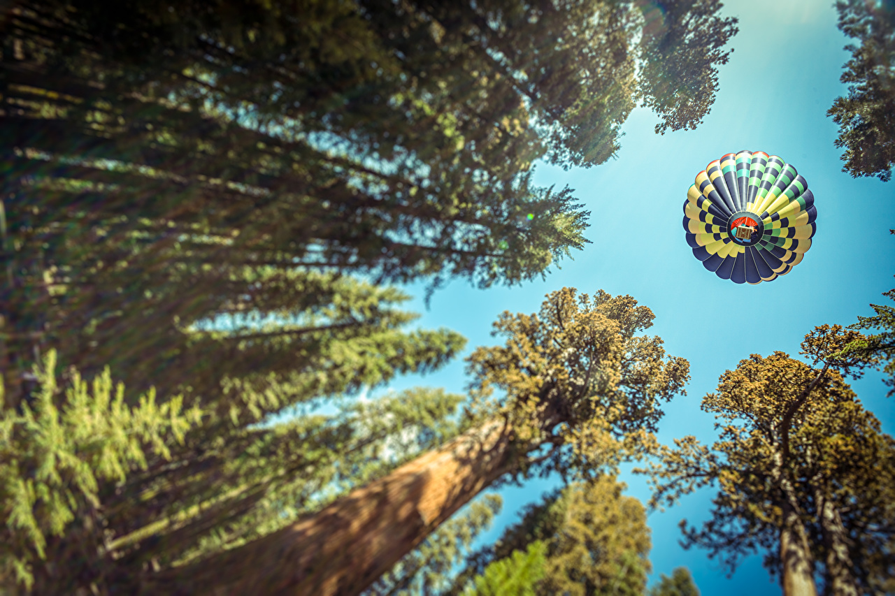 Forests_Aerostat_Trees_437549